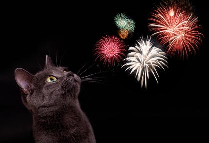 Eine graue Katze vor schwarzem Grund schaut sich ein Feuerwerk an.