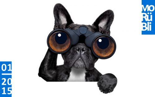 Hund schaut durch ein Fernglas. Monatsrückblick.
