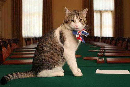 Eine Katze mit einer Fliege in den Farben der britischen Flagge sitzt auf einem großen Tisch in einem Konferenzsaal. Die Katze guckt direkt in die Kamera.