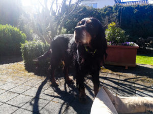 Home-Office_Aron_Hund