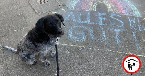 """Unser Büro-Hund Brenda sitzt auf dem Bürgersteig. Daneben ist die Kreidezeichnung eines Regenbogens zu sehen, unter der die Worte """"Alles wird gut!"""" geschrieben stehen."""